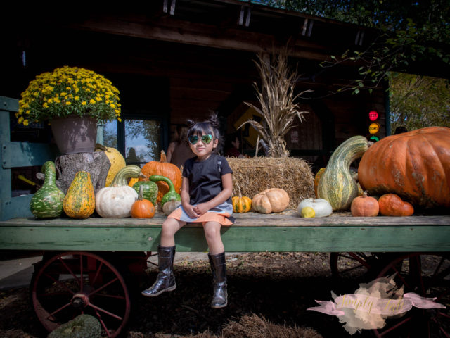 fox lady, pink barn, photographer, atlanta photographer, pumpkin patch, fall mini session, berry patch farms, reflection, cotton candy, playground