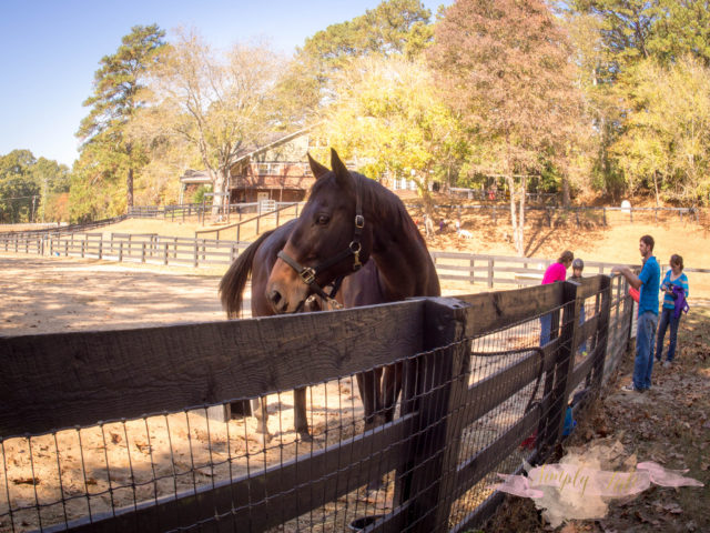 magnolia farm, milton, horseback riding, pony tales, alpharetta, young riders, goat farm, petting zoo, stable
