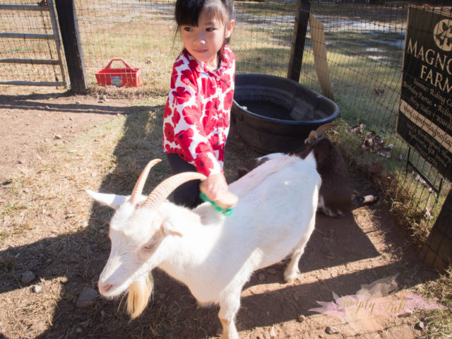 magnolia farm, milton, horseback riding, pony tales, alpharetta, young riders, goat farm, petting zoo, groupon