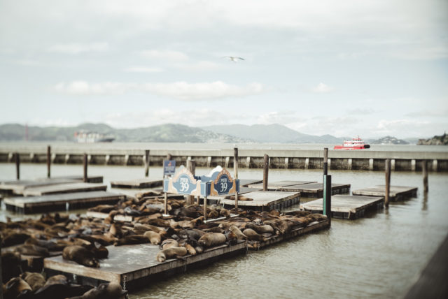 pier 39, marina, san fransisco, what to do in san fransisco, tourist area, sea lion