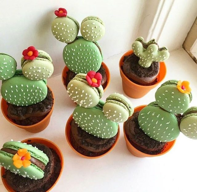 cactus macaroon, macaroon, succulent