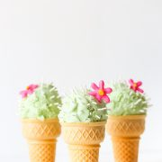 cactus, succulents, ice cream, catus ice cream
