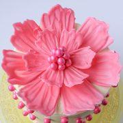 chocolate, beautiful cake